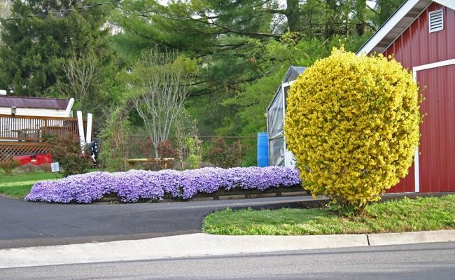 scene_Spring-Flowers