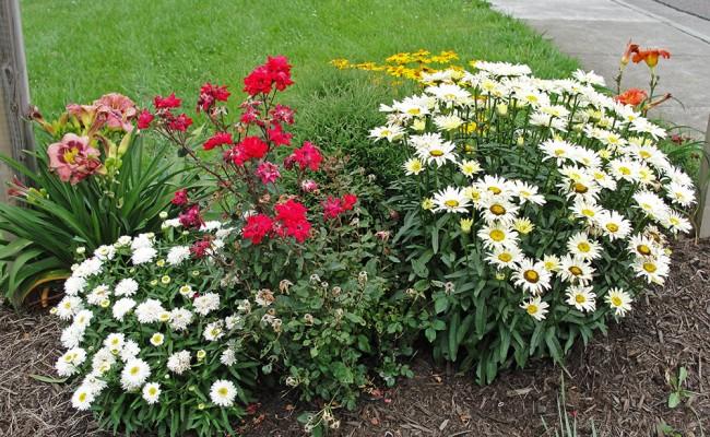 scene_Spring-Flowers2