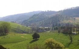 scene_Spring-Pastoral