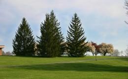 scene_Spring-Trees